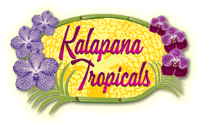 Kalapana Tropicals