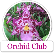 Kalapana Tropicals Orchid Club