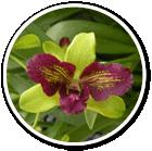 Shop Orchids