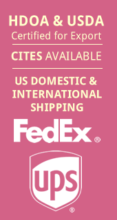 CITES Available. US & International Shipping with FedEx and UPS
